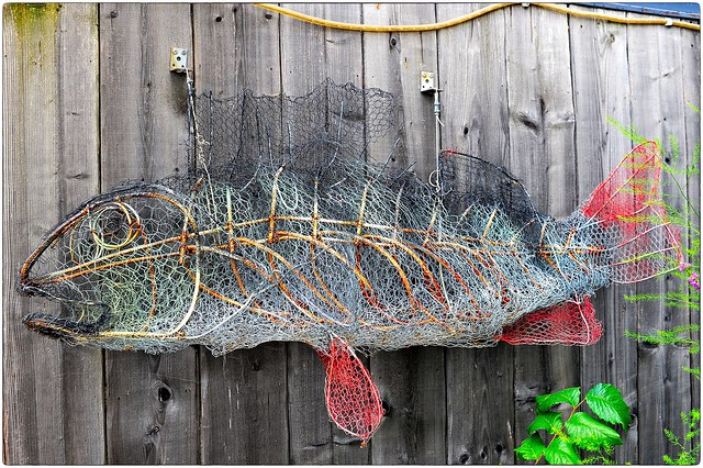 Fish by Fish the Net Becomes Full
