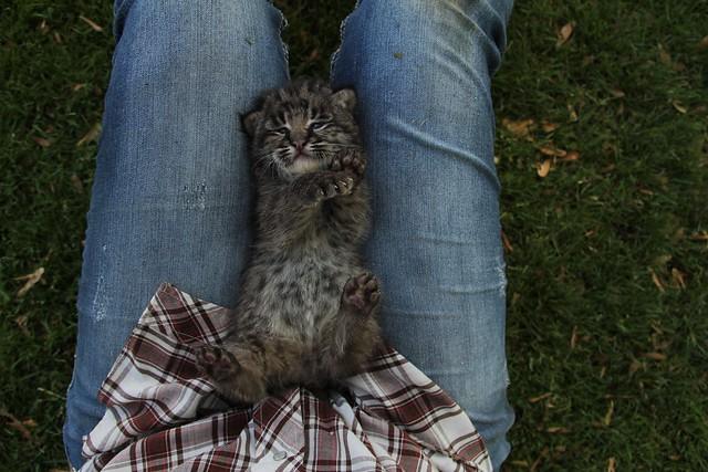 Bobcat Kitty (EXPLORED)