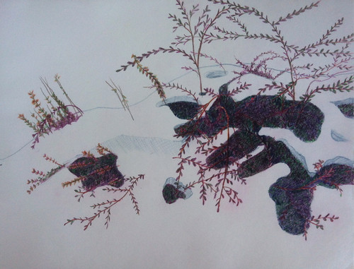 Snow Melt in the Garden (Colored Pencil Drawing) by randubnick
