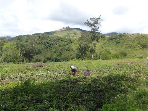 Papou13-Wamena sud-Sugokmo (82)