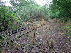 Croxley Green branch line