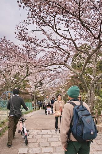 【写真】2013 桜 : 哲学の道/2018-12-24/IMGP9188