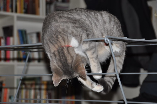 Maxi practising gymnastics on our clothes airer