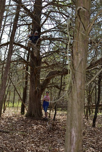 Local Treks Hiking: Climbing Tree