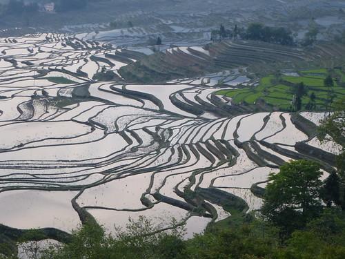 Yunnan13-Yuanyang 1-Duoyishu (42)