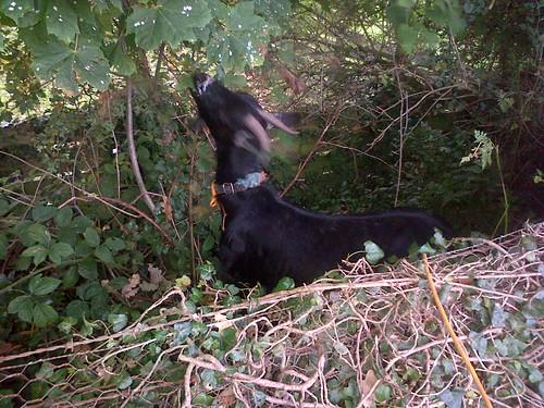 goat Oct 13 2