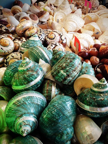 Sea shells for sale.