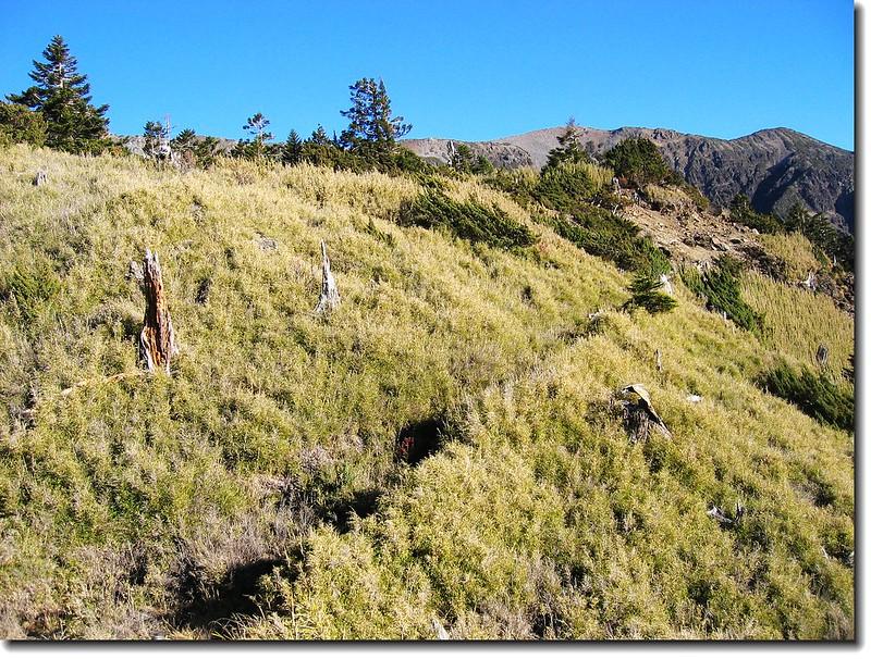 登西峰步道穿越箭竹林