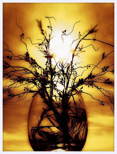sunrise hospital lomo bouquet blinkagain