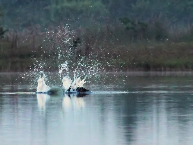 Osprey impact 2-20131020