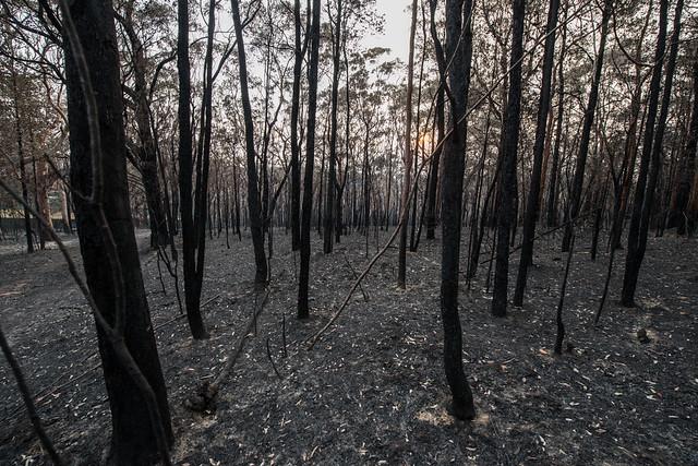 Bushfire NSW 2013