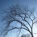 04062012-tree01