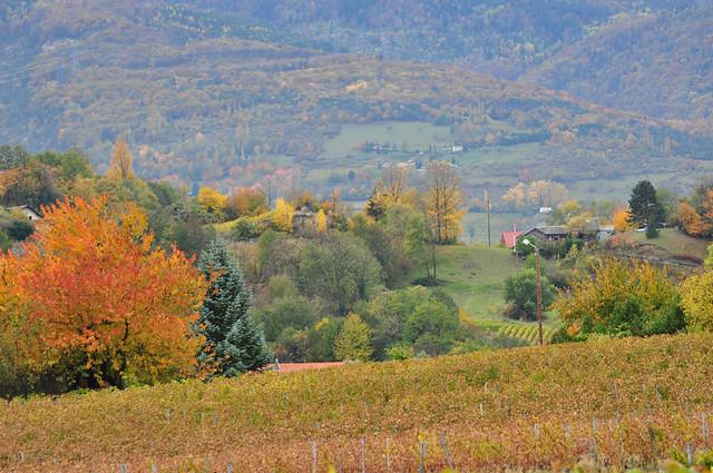 Quand j'étais jeune, l'automne était en couleurs ! ~ When I was young, we had full of colors in autumn !