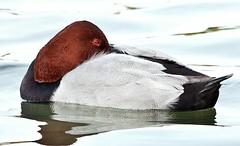 Реферат на тему зимующие птицы Официальный сайт Реферат на тему зимующие птицы