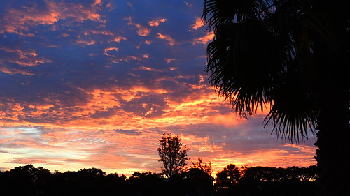morning wallpaper sun color tree weather clouds sunrise dawn flickr florida palm bradenton mullhaupt jimmullhaupt