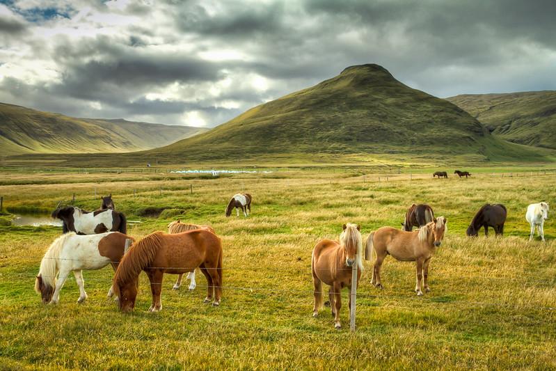 Horses in Strandabyggð