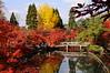 2013 Kyoto Momiji - Eikando
