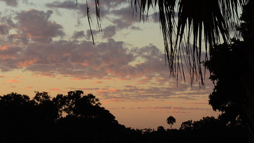 morning winter wallpaper sun clouds sunrise palms flickr florida tropical bradenton trrees mullhaupt jimmullhaupt