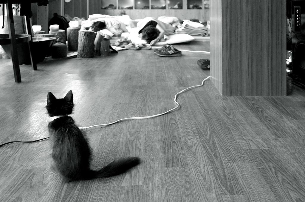 a kitty