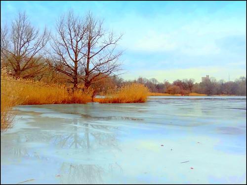 newyork brooklyn image prospectpark dmitriyfomenko winter12014