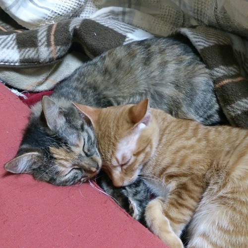 ママが大好きなトロワと、クッションを枕にし、お尻だけこたつに入るしっぽちゃん by Chinobu