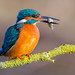 Kingfisher brunch by Lyle McCalmont