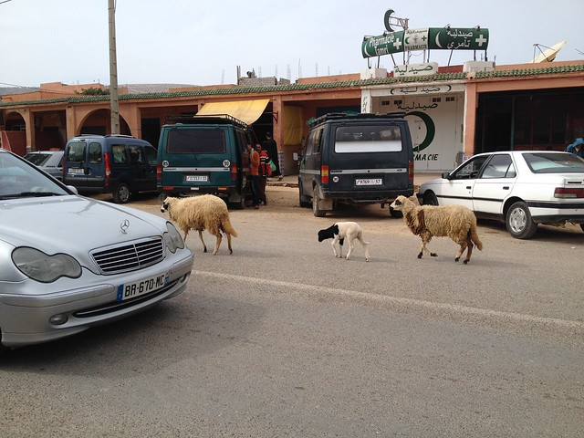 animals in the road in Morocco