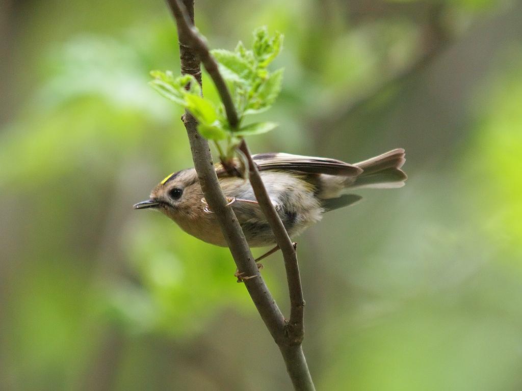 кизил, названия птиц нижегор области с фото упорно тренируются для