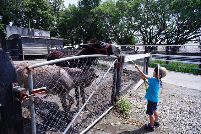 Feeding Donkey