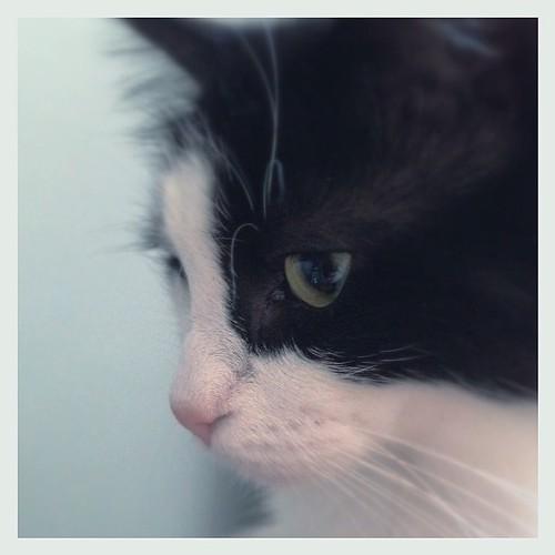#fmsphotoaday May 26 - Pet #catsofinstagram