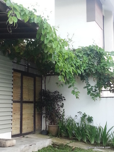 Back in My Nuvali Home May2014 (9)