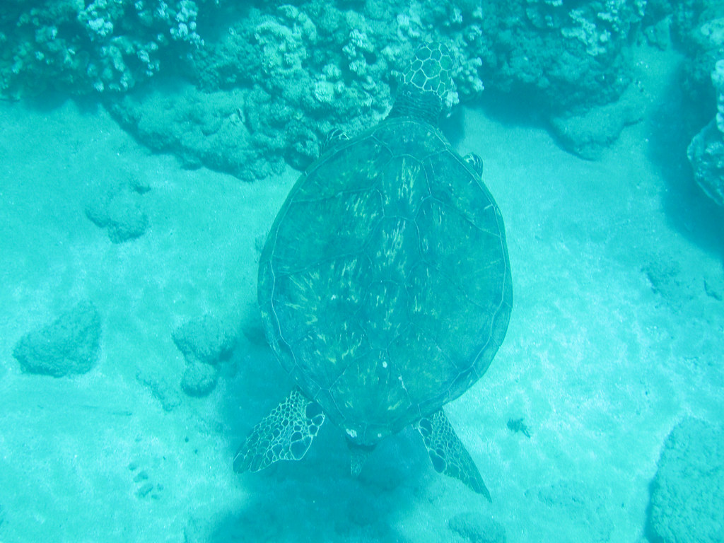 First Turtle of the Trip