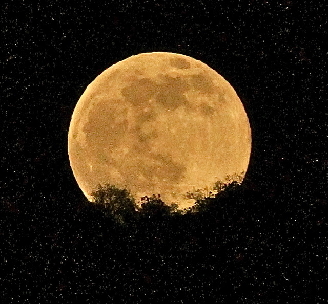 Tonight's Full Honey Moonrise from Marvin Braude Mulholland Gateway Park