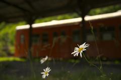 駅に咲く花 その2