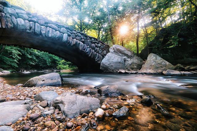 Morning in Rock Creek Park