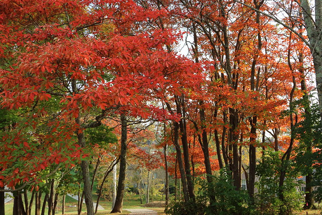 Autumn Colors @ KY #52, Canon EOS M3, Canon EF-M 15-45mm f/3.5-6.3 IS STM
