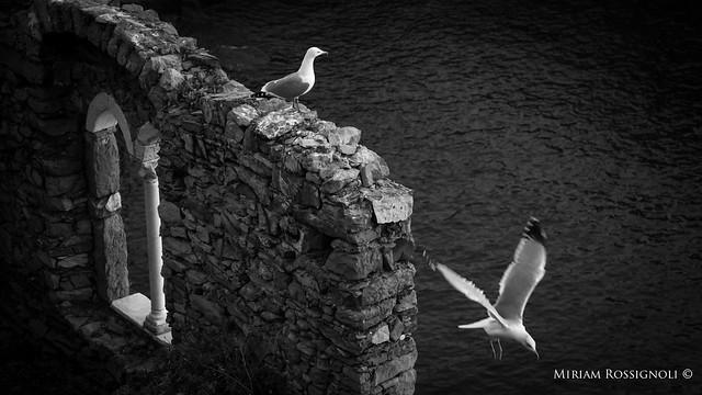 miriam-rossignoli-local-photographer-cinque-terre-sea-mediterraneo-portovenere-2016