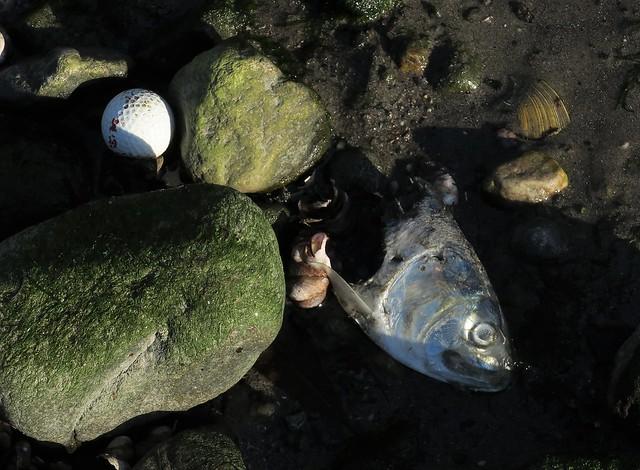 golf balls kill bunker