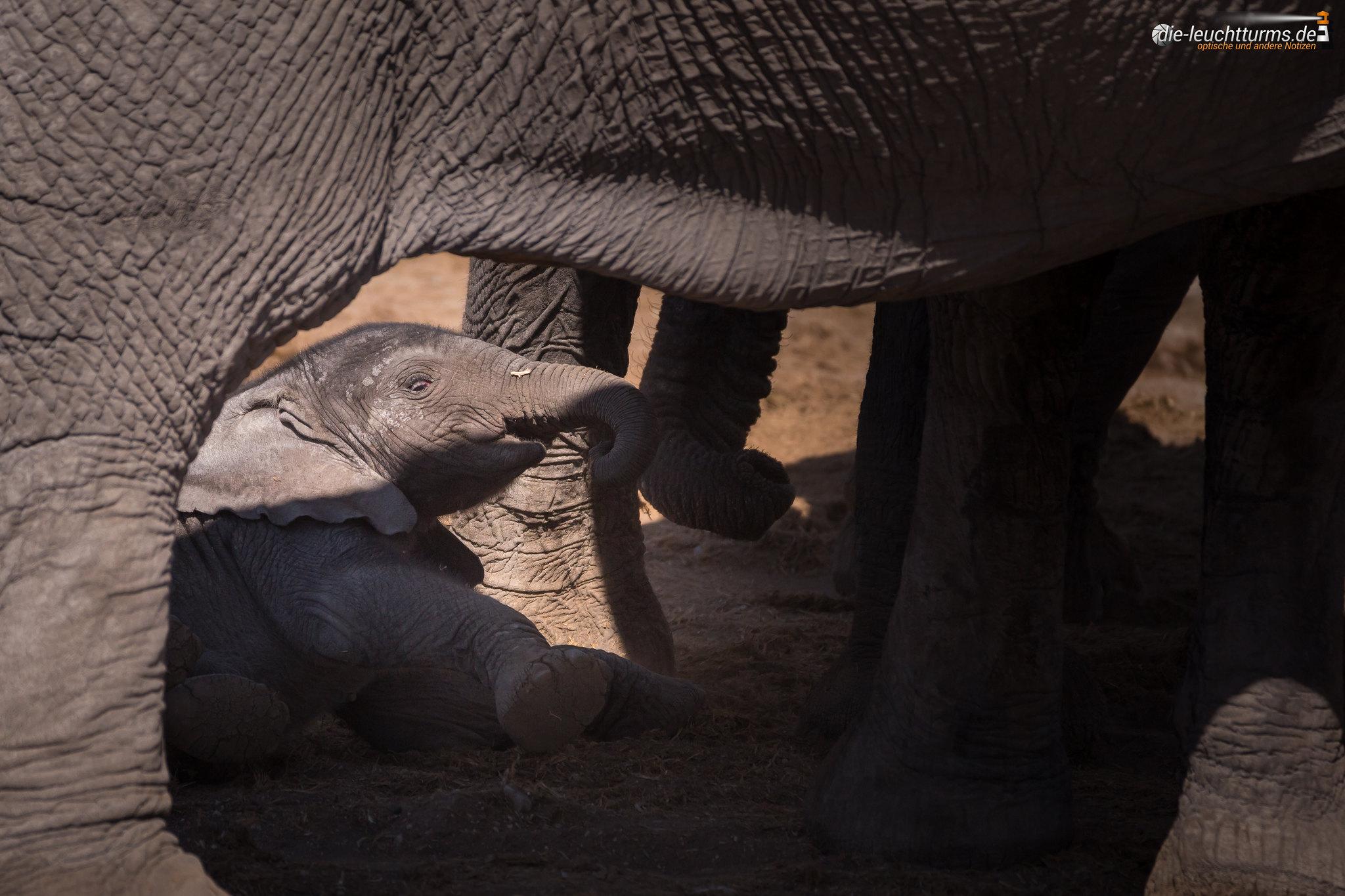 Elefants at Okaukuejo Waterhole