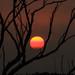 Smokey Sunset by robertdownie