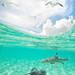 Bora Bora - French Polynesia by Jesse Estes