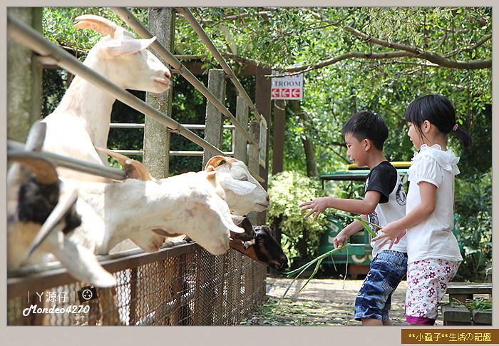 益健羊乳場13