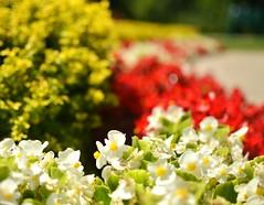 Mooreland Mansion Flowers