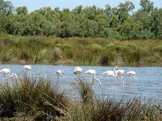 061 Flamingo's