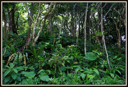 森林蓊鬱,生氣蓬勃的蘭嶼(黃裕文攝)