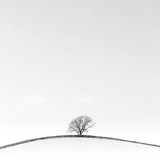 Lone Tree. Yorkshire Dales