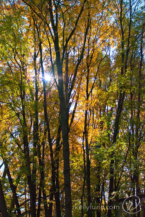 110313-trees-sun