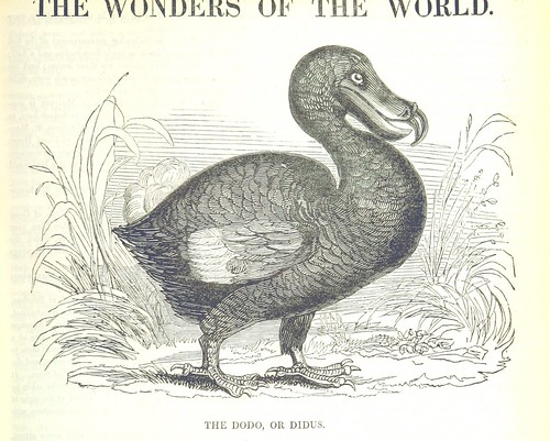 Image taken from page 227 of 'The Wonders of The World in Nature and Art. Edited by H. Ince'