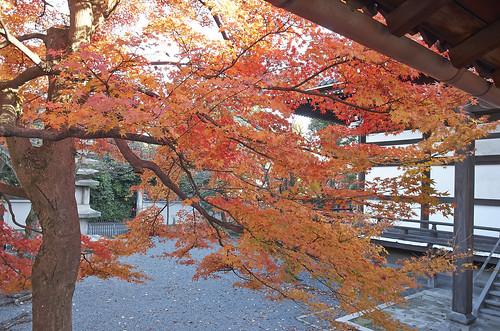 【写真】2013 紅葉 : 妙顕寺/2020-11-01/IMGP4154