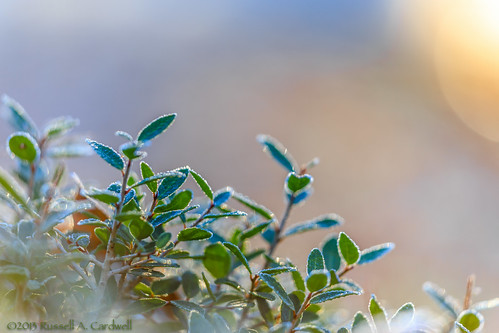 macro leaves closeup sunrise canon dawn backyard frost texas unitedstates outdoor sigma bluehour lumberton bmttx ifttt